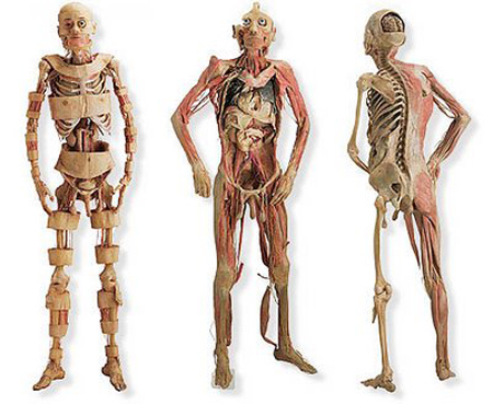 bioquica-del-cos