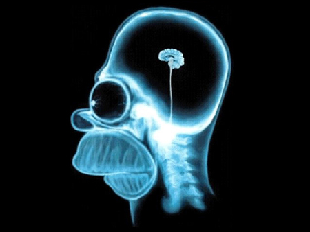 cervell-homer
