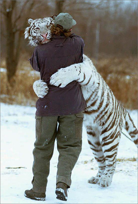 amic-tigre