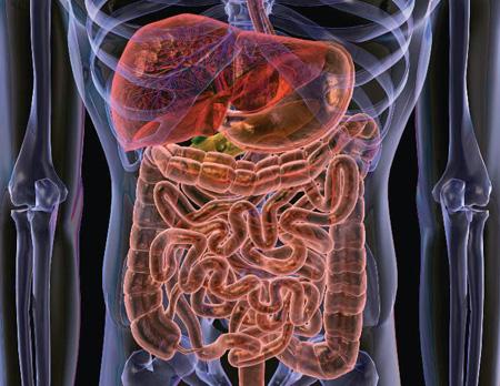 tub-digestiu