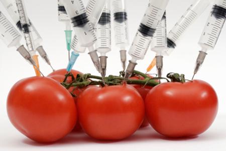 tomaquet transgenic