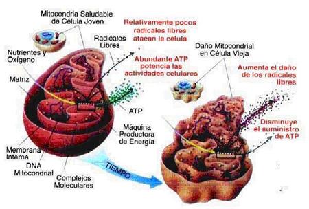 antioxidants 02