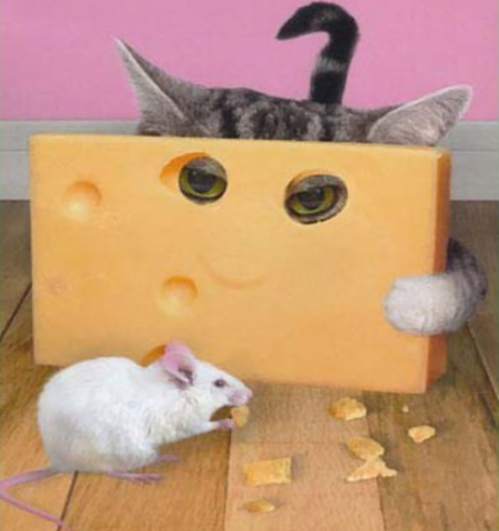 el gat i la rata 01