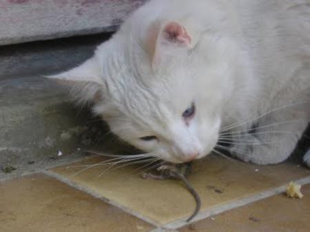 el gat i la rata 02