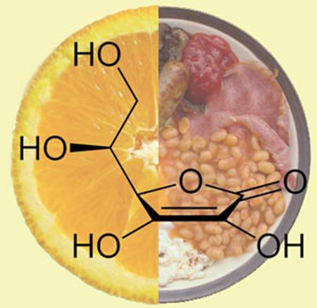 vitamina c greixos