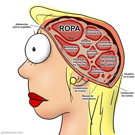Cervell dona